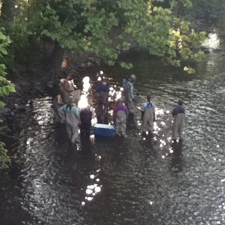 MSU students collecting samples in the Red Cedar River